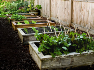 Raised Bed Garden Plans : Choosing The Latest Bed Frames