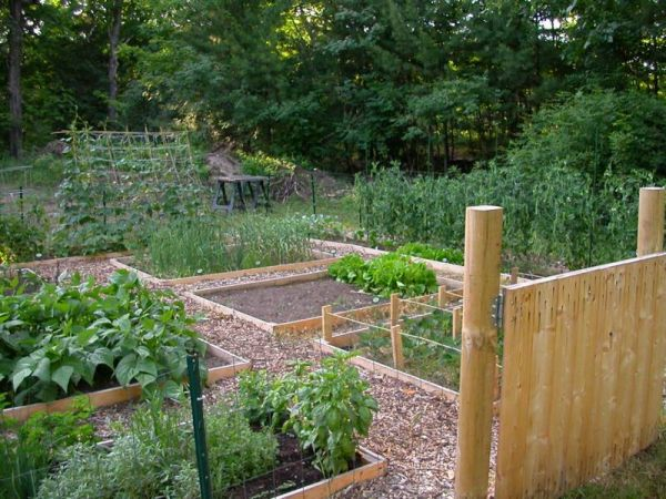 Raised bed garden plans choosing the latest bed frames for Garden bed designs
