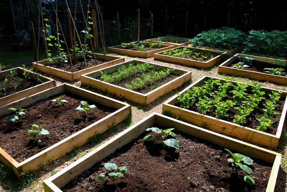 Raised bed garden plans choosing the latest bed frames for Vegetable garden design